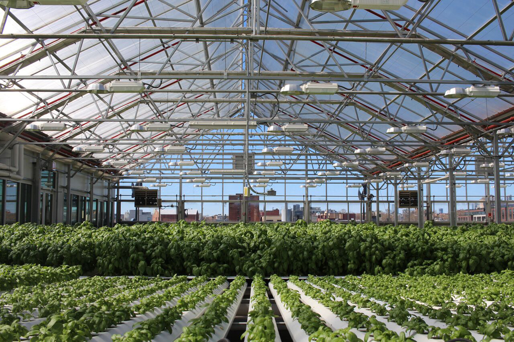 A strategy for Living with Nature: Gotham Greens, a rooftop greenhouse in Brooklyn. Discover strategies for addressing the big challenges facing the city in the Future City Lab. Photo credit: Gotham Greens.