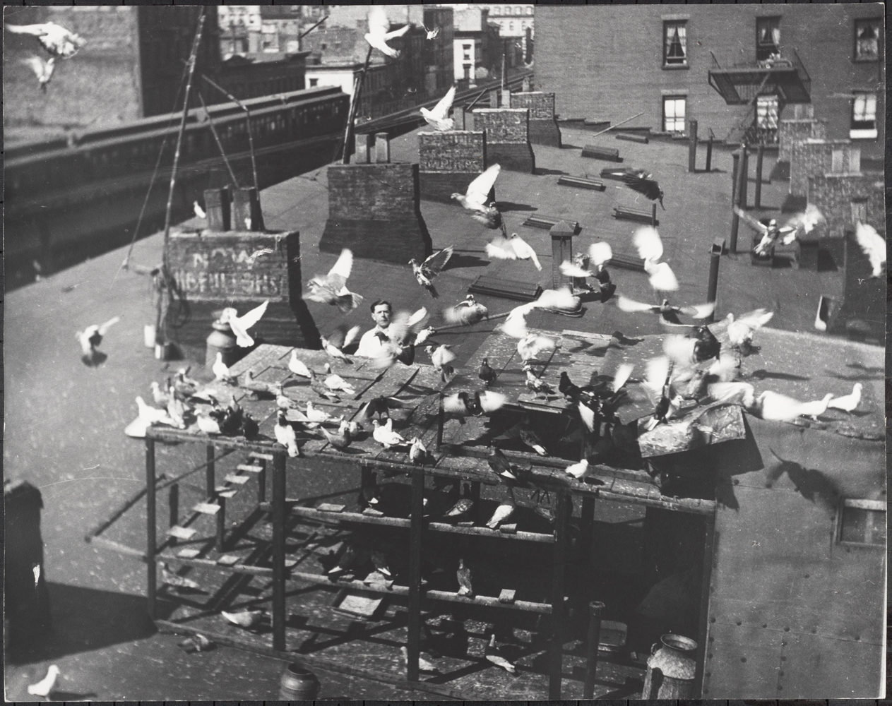 Roy Perry. Man on Roof Tending Pigeon Brood, Third Avenue, ca 1940. Museum of the City of New York. 80.102.178