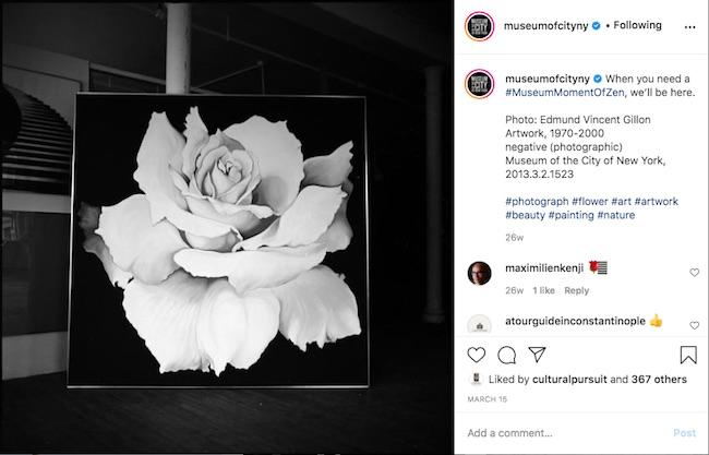 Capture d'écran de la publication Instagram #MuseumMomentOfZen avec une image d'une rose de la collection du Musée