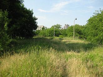 Un campo en Melrose